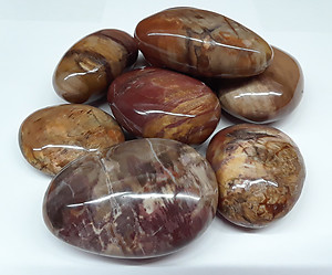 Petrified Wood Gallets - Large