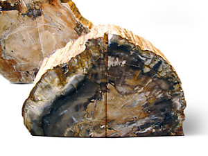 Petrified Wood Bookends (1-3Kg) - AA